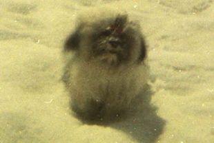 (1970 06 00) Slim at Crater Lake (sitting) 62108991_353447288645822_7445126293500198912_n